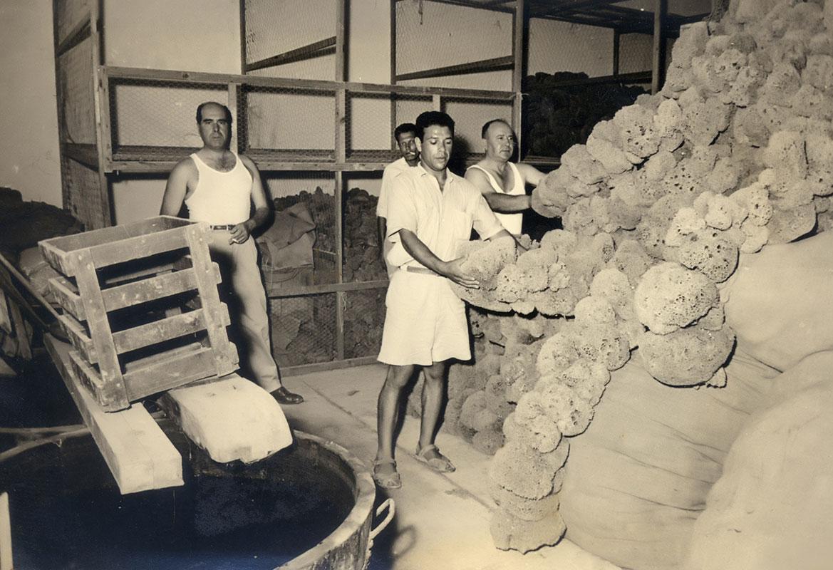 Stepma - société d'exportation des éponges en Tunisie